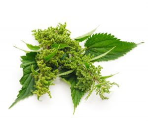 Nettle Leaf Extract ingredient